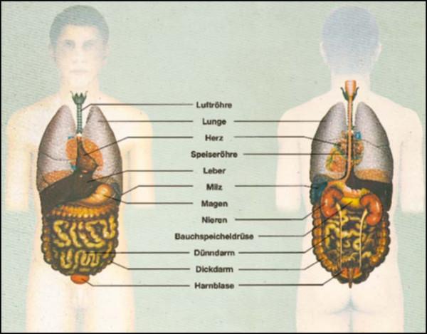 Transparente-Mappe Der Mensch: Innere Organe