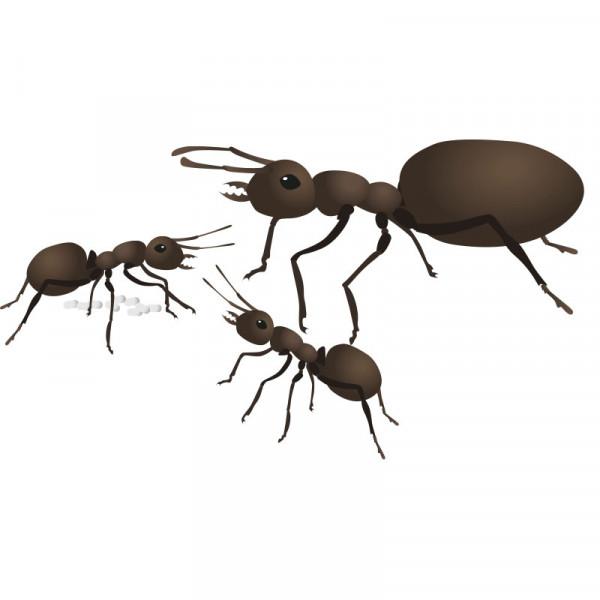 Hagemann Ameisenstaat