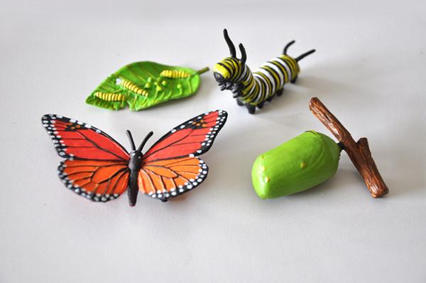 Lebenszyklus des Monarchfalters (Modelle)