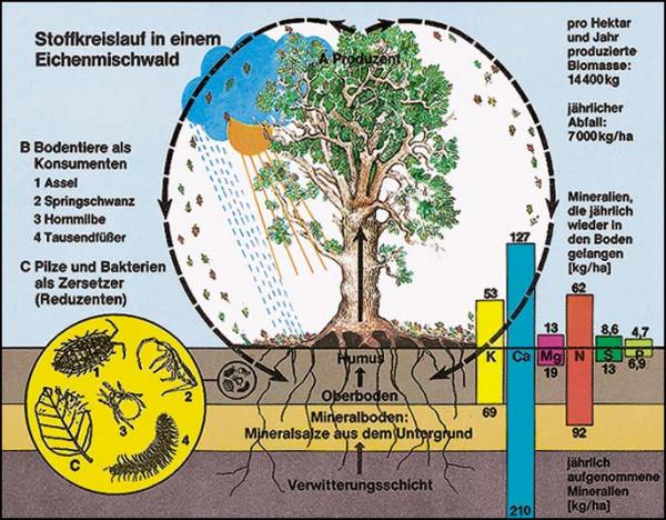 Transparente-Mappe Bodenbiologie und Umwelt