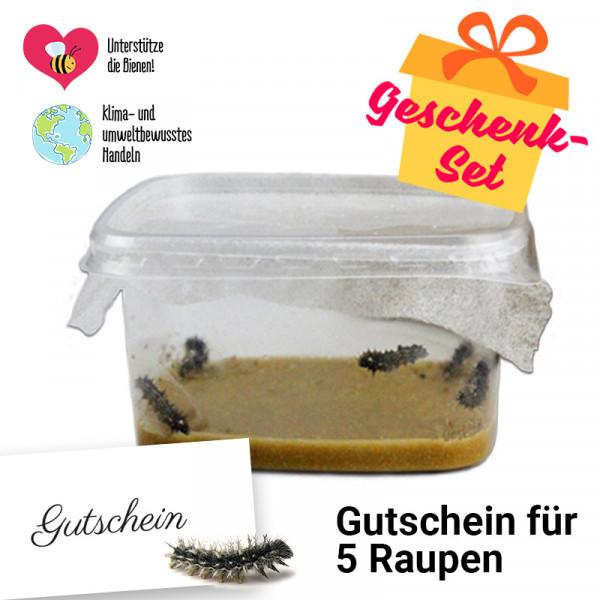 Hagemann Geschenk-Set Nachbestellung Schmetterlings-Raupen