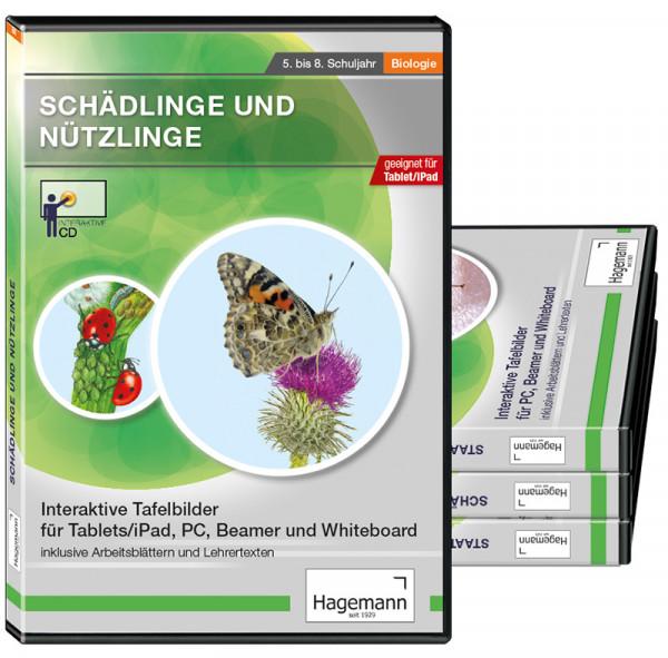 Themenpaket Insekten