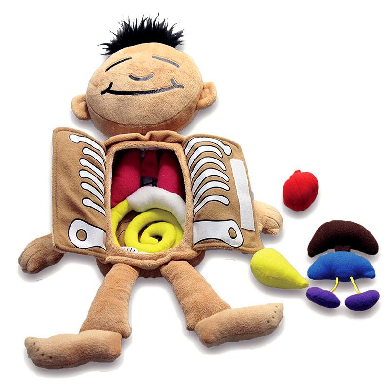 Ausgezeichnet Anatomie Puppe Für Kinder Bilder - Menschliche ...