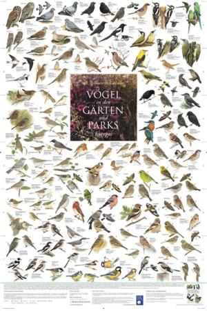 Vögel in Gärten und Parks Europas (Poster)