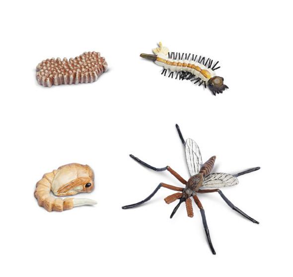 Lebenszyklus des Moskitos (Modelle)