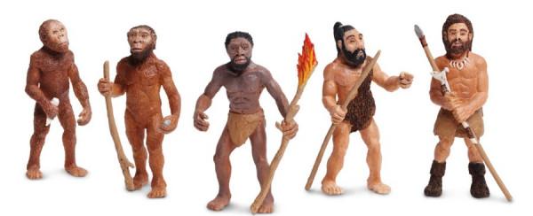 Evolution des Menschen (Modelle)