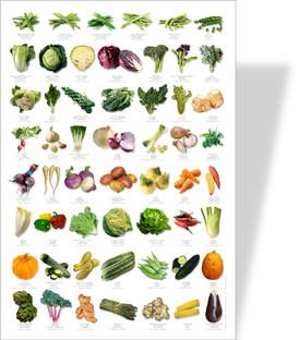 Naturposter Gemüse