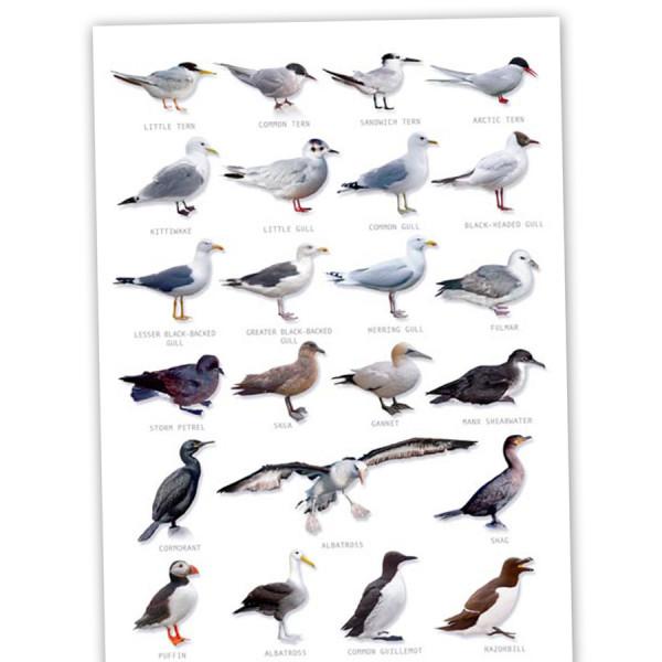 Hagemann Bestimmungstafel Seevögel