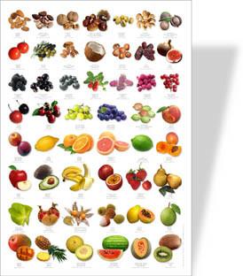 Naturposter Früchte