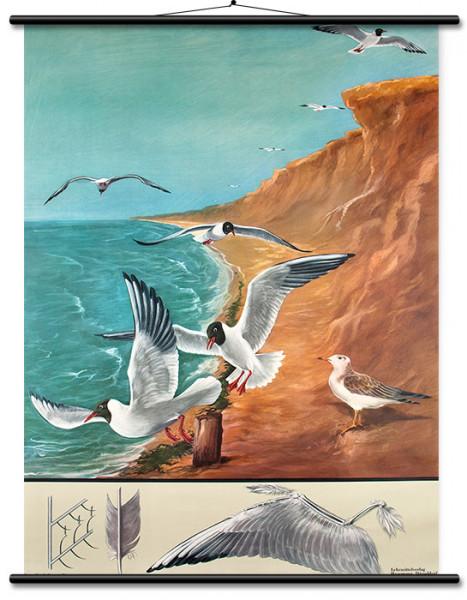 Lehrtafel Lachmöve-Vogelflug