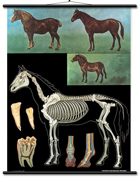 Lehrtafel Pferd