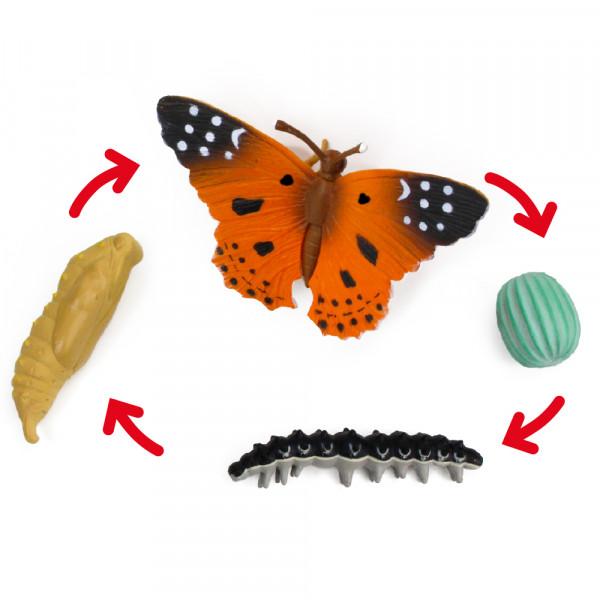 Lebenszyklus des Distelfalters (Modelle)