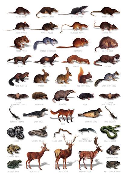 Hagemann Bestimmungstafel Europäische Wildtiere