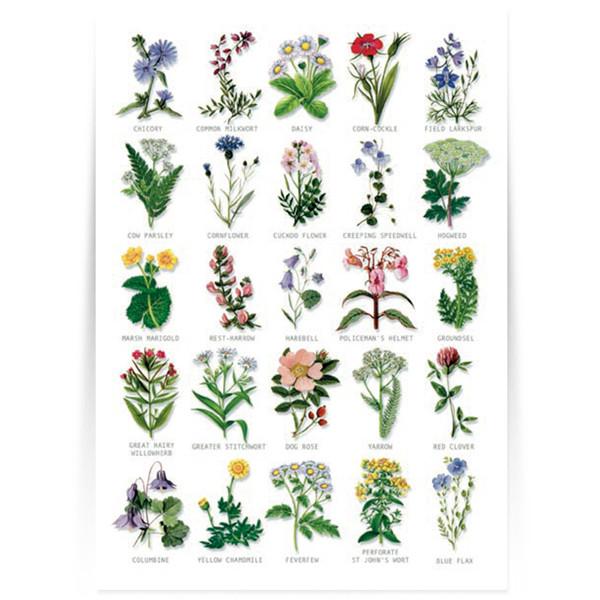 Hagemann Bestimmungstafel Wildblumen