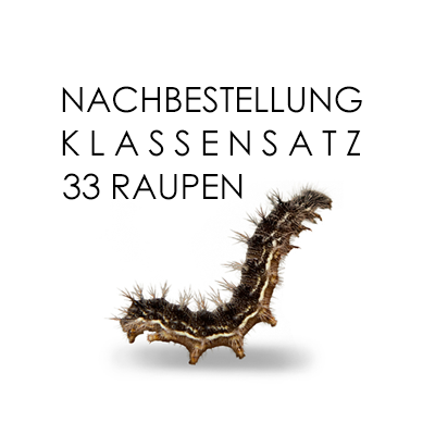 Raupen-Nachbestellung Klassensatz (33 Distelfalterraupen)