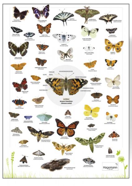 Naturposter Schmetterlinge