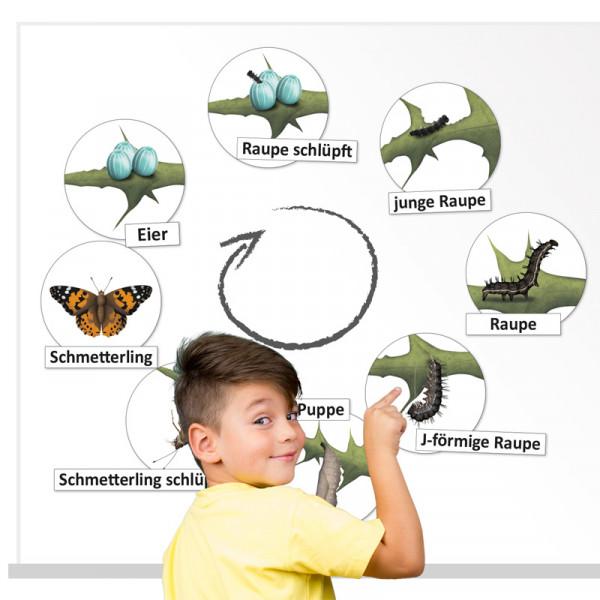 Hagemann Lebenszyklus Schmetterling (magnetisch)