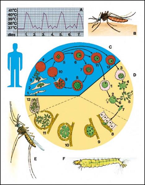 Transparente-Mappe Mikroorg. Krankheitserreger
