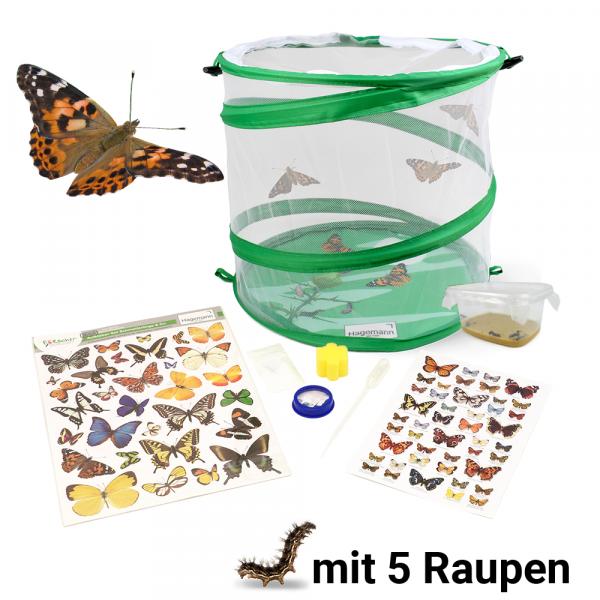 Hagemann Schmetterlings-Zuchtset Test-Artikel
