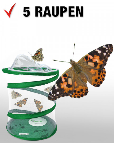 Hagemann Schmetterlings-Zuchtset, kompakt