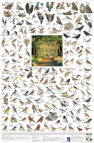 Vögel auf dem Land (Poster)