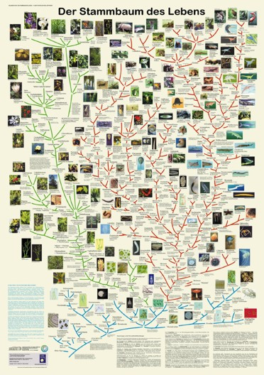 Der Stammbaum des Lebens (Poster)
