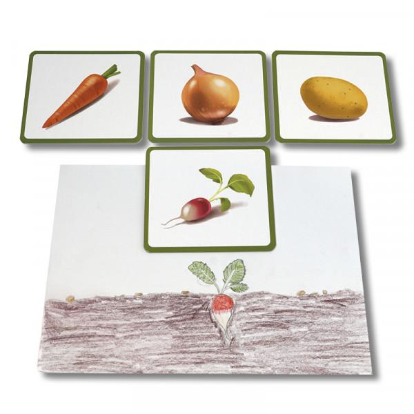 Bildkarten Gemüse, 24-tlg.