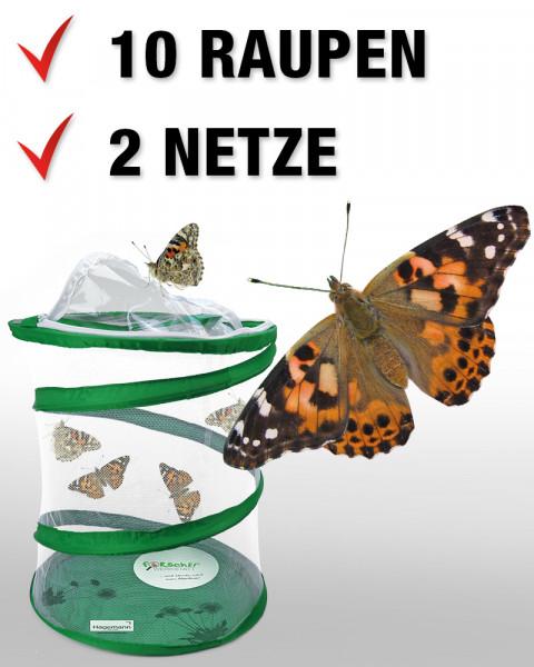 Hagemann Schmetterlings-Zuchtset, groß