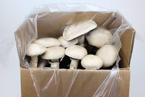 Hagemann Bio Pilz-Zuchtset Champignon (weiß)