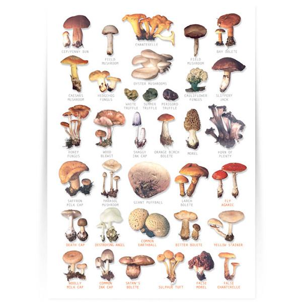 Hagemann Bestimmungstafel Pilze