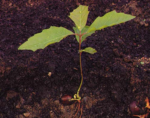 DVD-Lehrfilm Fortpflanzung + Entwicklung v. Blütenpflanzen