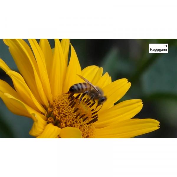 Hagemann Lehrfilm Die Welt der Wild- und Honigbienen