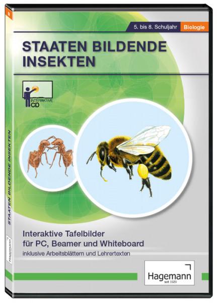 Interaktive Tafelbilder Staaten bildende Insekten