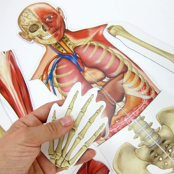 Menschlicher Körper (magnetisch) | Hagemann