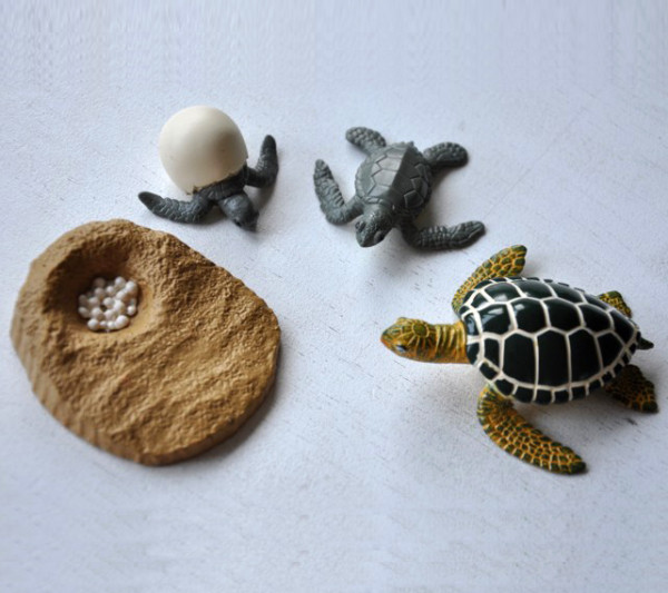 Lebenszyklus der Grünen Meeresschildkröte (Modelle)