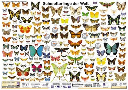 Schmetterlinge der Welt (Poster)